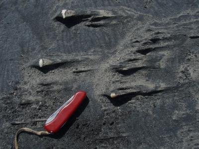 Положительные формы выдувания песков